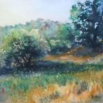 olivegrove