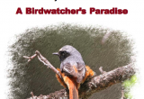 Birdwatchers Paradise